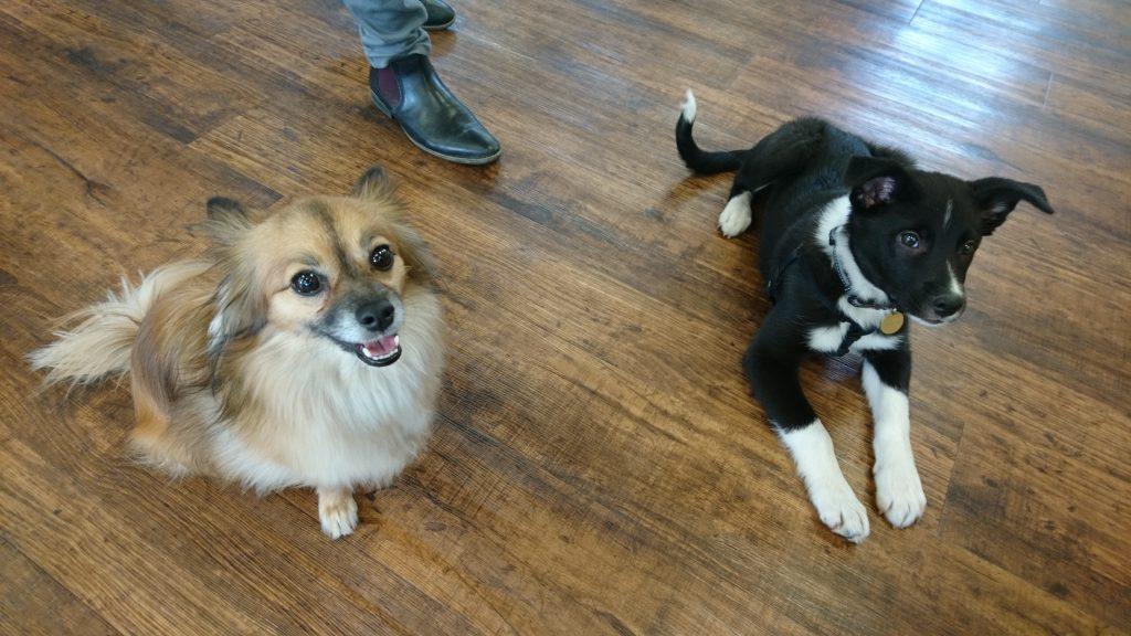 Chewy and Koa